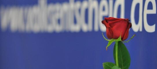 Die Rose für die direkte Demokratie